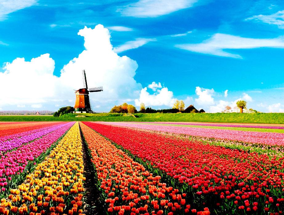 Σπουδές στην Ολλανδία